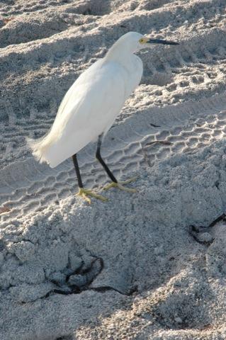 wit vogeltje