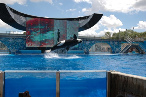 orka show