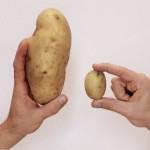 patat of aardappel